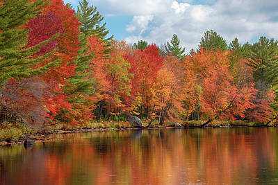 Autumn Trees At Riverbank, Oswegatchie Poster