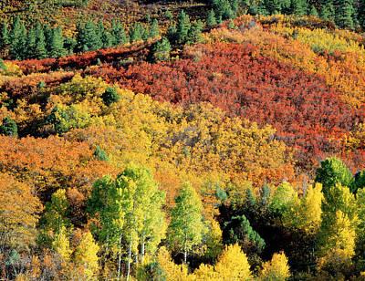Autumn Trees Co Usa Poster