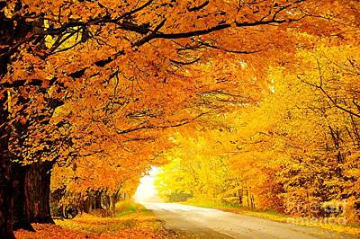 Autumn Tunnel Of Gold Poster by Terri Gostola