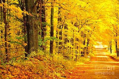 Autumn Tunnel Of Trees 36 Poster by Terri Gostola