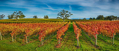 Autumn Vineyard At Napa Valley Poster by Panoramic Images