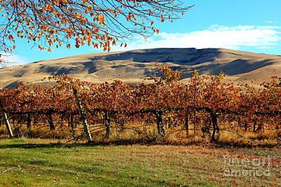 Autumn Vineyard In The Valley Poster by Carol Groenen