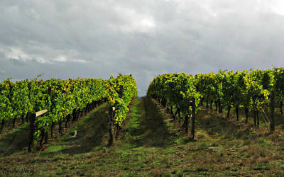 Poster featuring the photograph Autumn Vineyard by Mindy Bench