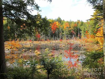 Autumn Wetlands Poster by Linda Marcille