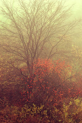Autumnal Trees In Fog Poster by Jenny Rainbow