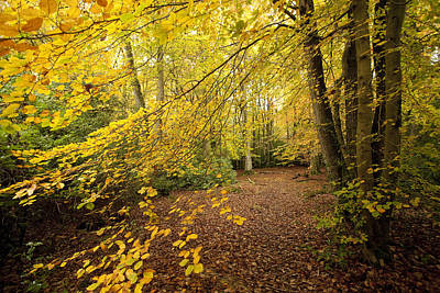 Autumnal Woodland II Poster