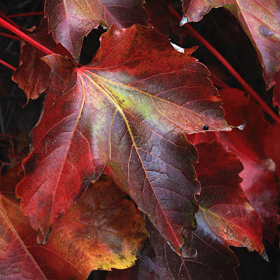 Autumn's Array 31 Poster by Penelope Moore