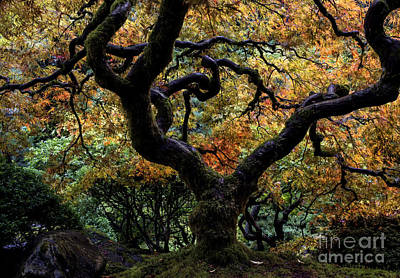 Autumn's Canopy Poster by Mike Dawson