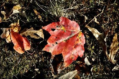Autumns End Poster