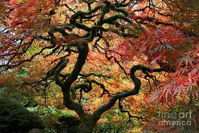 Autumn's Fire Poster