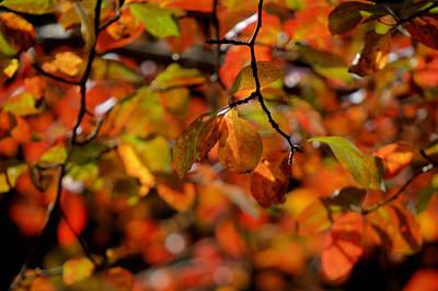 Autumn's Firey Show Poster