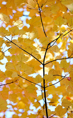 Autumn's Golden Leaves Poster by Jennie Marie Schell