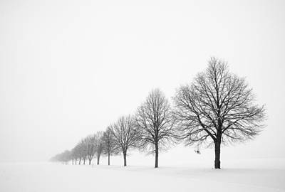 Avenue With Row Of Trees In Winter Poster