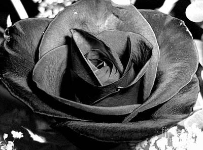 Awakened Black Rose Poster