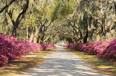 Poster featuring the photograph azalea lined road in Spring by Bradford Martin