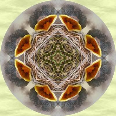 Baby Bird Kaleidoscope Poster