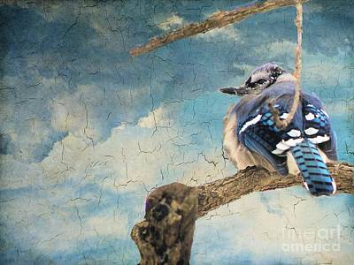 Baby Blue Jay In Winter Poster