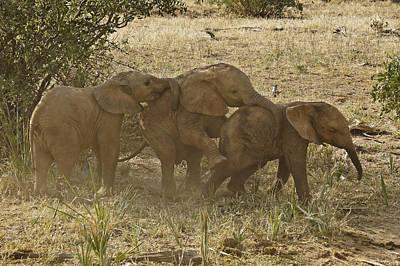 Baby Elephant Choo-choo Poster by Michele Burgess