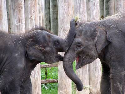 Baby Elephants - Bowie And Belle Poster
