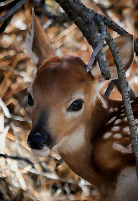 Baby Face Fawn Poster by Athena Mckinzie