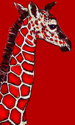 Baby Giraffe In Red Black And White Poster