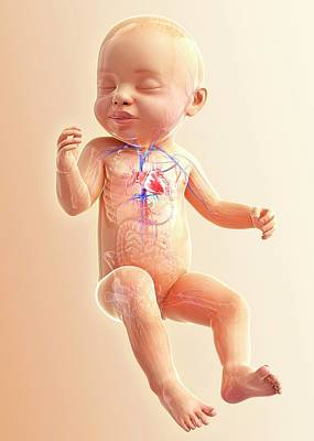 Baby's Respiratory System Poster