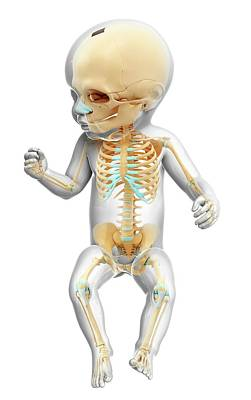 Baby's Skeleton Poster