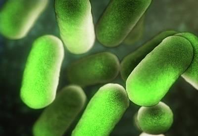 Bacillus Bacteria Poster by Equinox Graphics