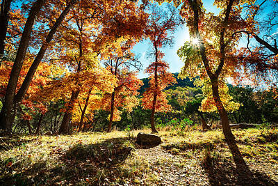 Backlit Wonderland - Lost Maples State Natural Area Texas Hill Country Poster by Silvio Ligutti