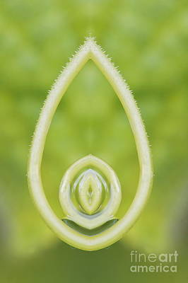 Background With Cucumber Tendril Figure Poster