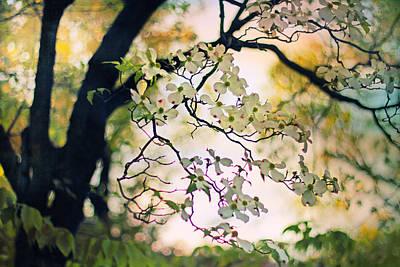 Backlit Blossom Poster by Jessica Jenney