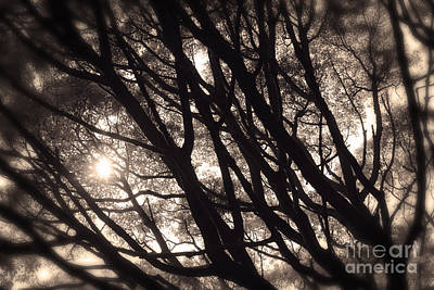 Backlit Branches Of A Majestic Tree I Poster