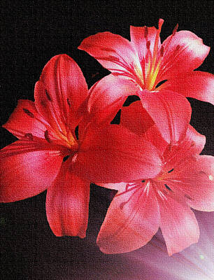 Backlit Lilies Poster