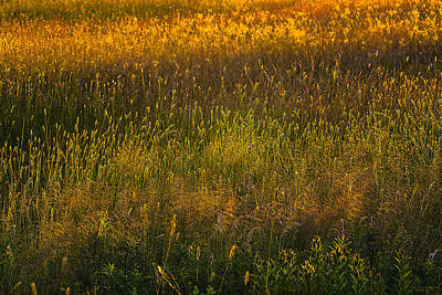 Poster featuring the photograph Backlit Meadow Grasses by Marty Saccone
