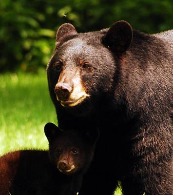 Backyard Bears Poster by Lori Tambakis