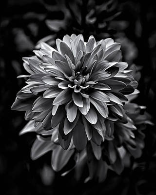 Backyard Flowers In Black And White 15 Poster