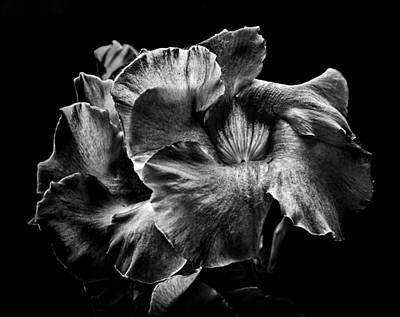 Backyard Flowers In Black And White 2 Poster