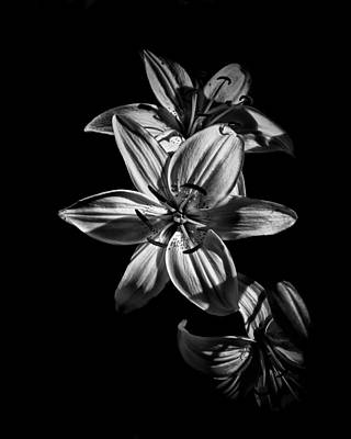 Backyard Flowers In Black And White 9 Poster