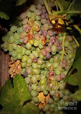 Backyard Garden Series -hidden Grape Cluster Poster by Carol Groenen