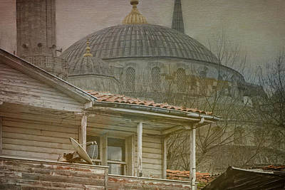 Backyard Splendor Poster by Joan Carroll