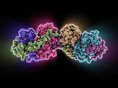Bacterial Protein-chaperone Complex Poster by Science Photo Library