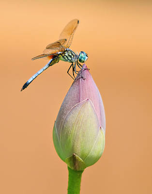 Balance Of Nature Poster
