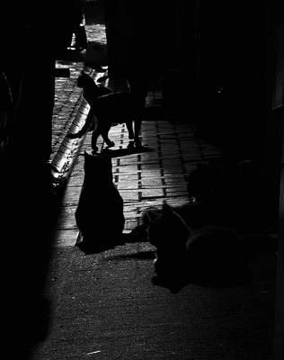 Balat Cats Poster by Ahmet can  Koc