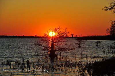 Bald Cypress At Sunset Poster by Bruce A Lee