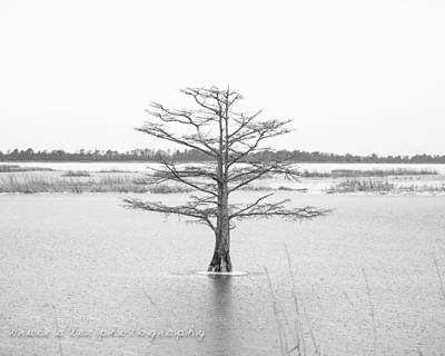 Bald Cypress Poster by Bruce A Lee