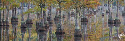 Bald Cypress Trees In A Forest, George Poster