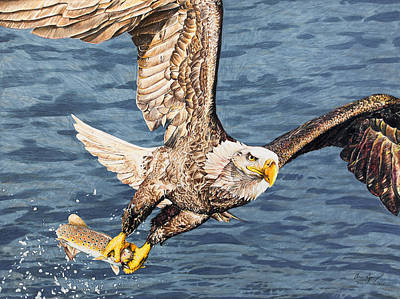 Poster featuring the drawing Bald Eagle Fishing  by Aaron Spong