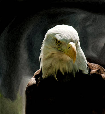 Bald Eagle Giving You That Eye Poster