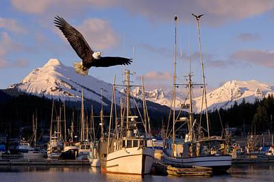 Bald Eagle In Flight Through Auke Bay Poster by John Hyde