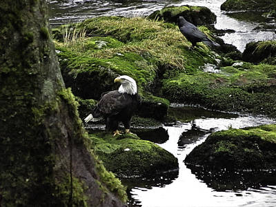 Poster featuring the pyrography Bald Eagle On The Creek. by Timothy Latta